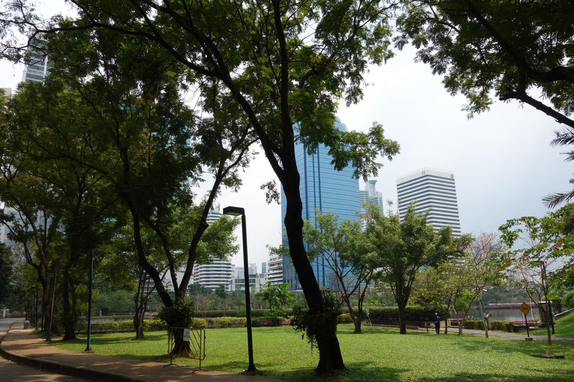 タイ,バンコク,ベンジャキティ公園,猫