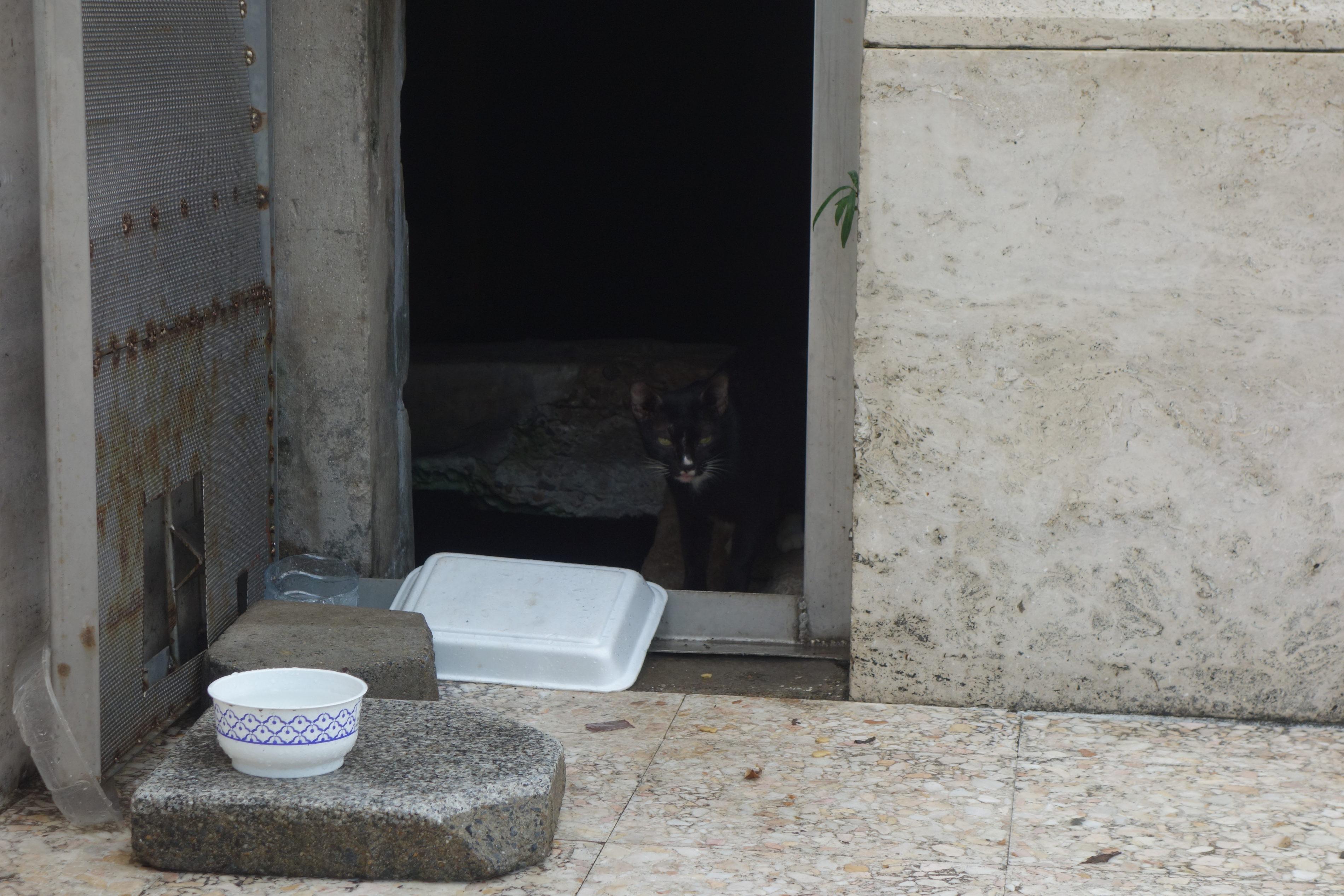 ルンピニ公園,黒猫