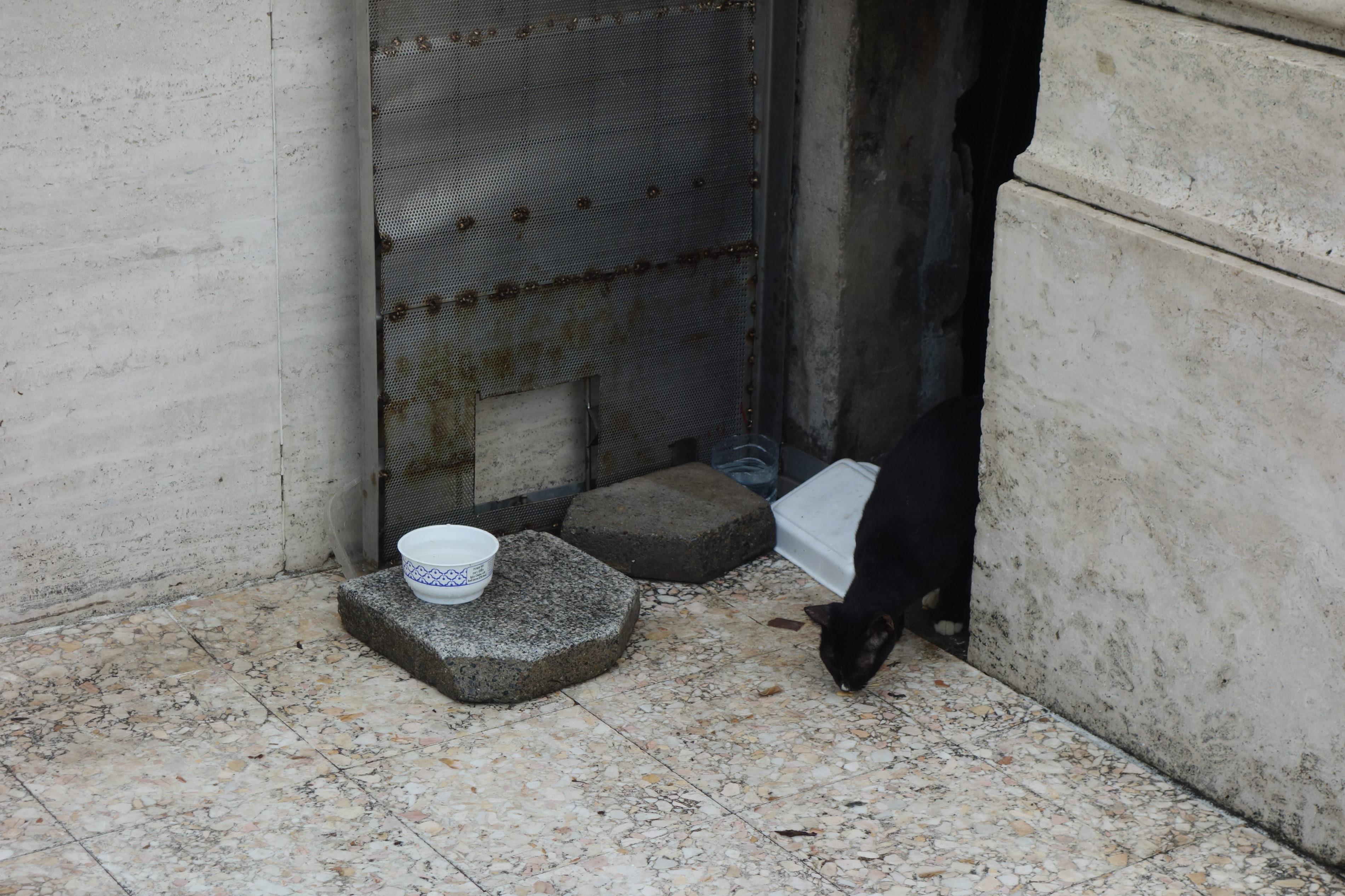 ルンピニ公園の黒猫