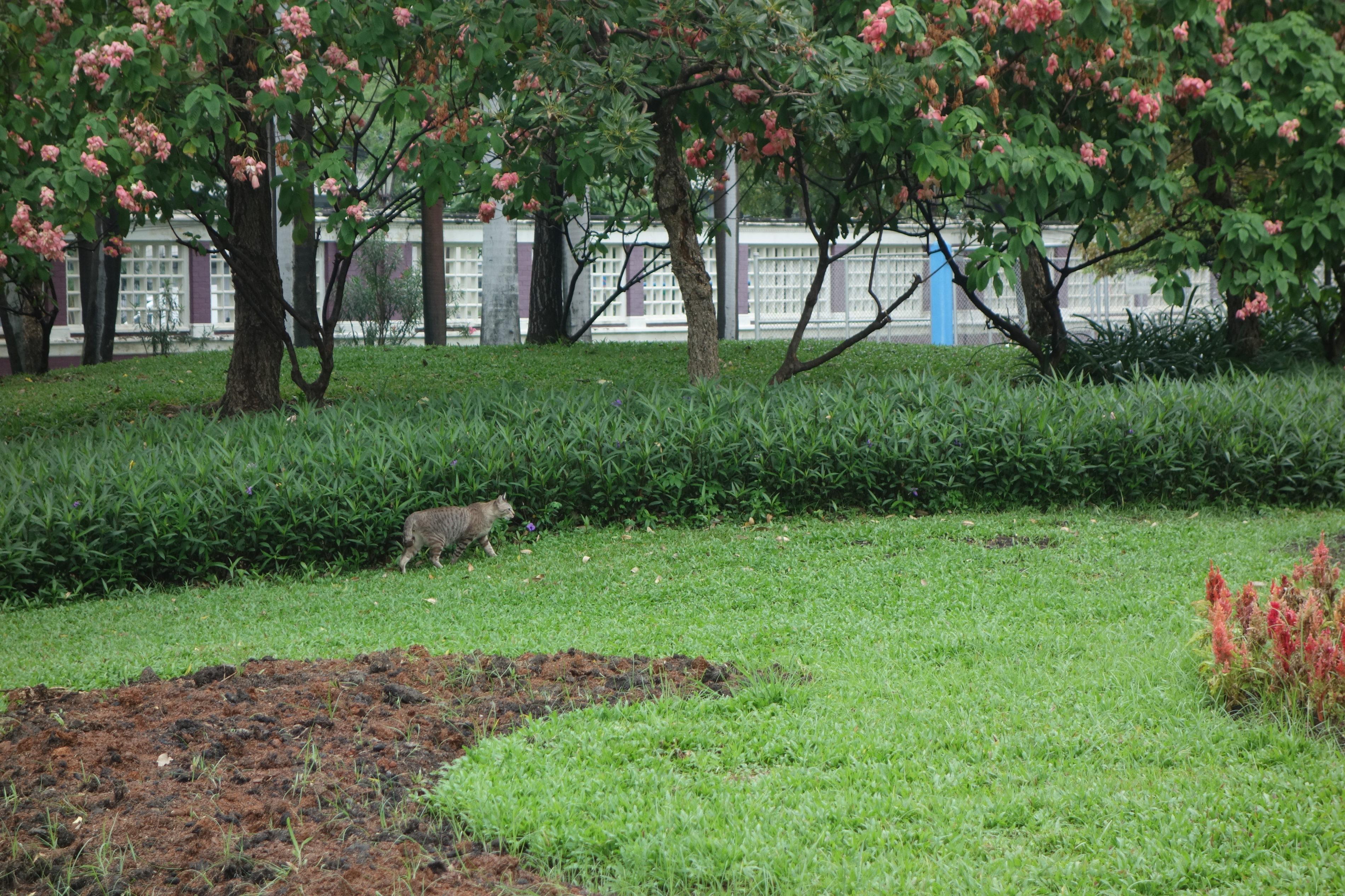 ルンピニ公園,猫