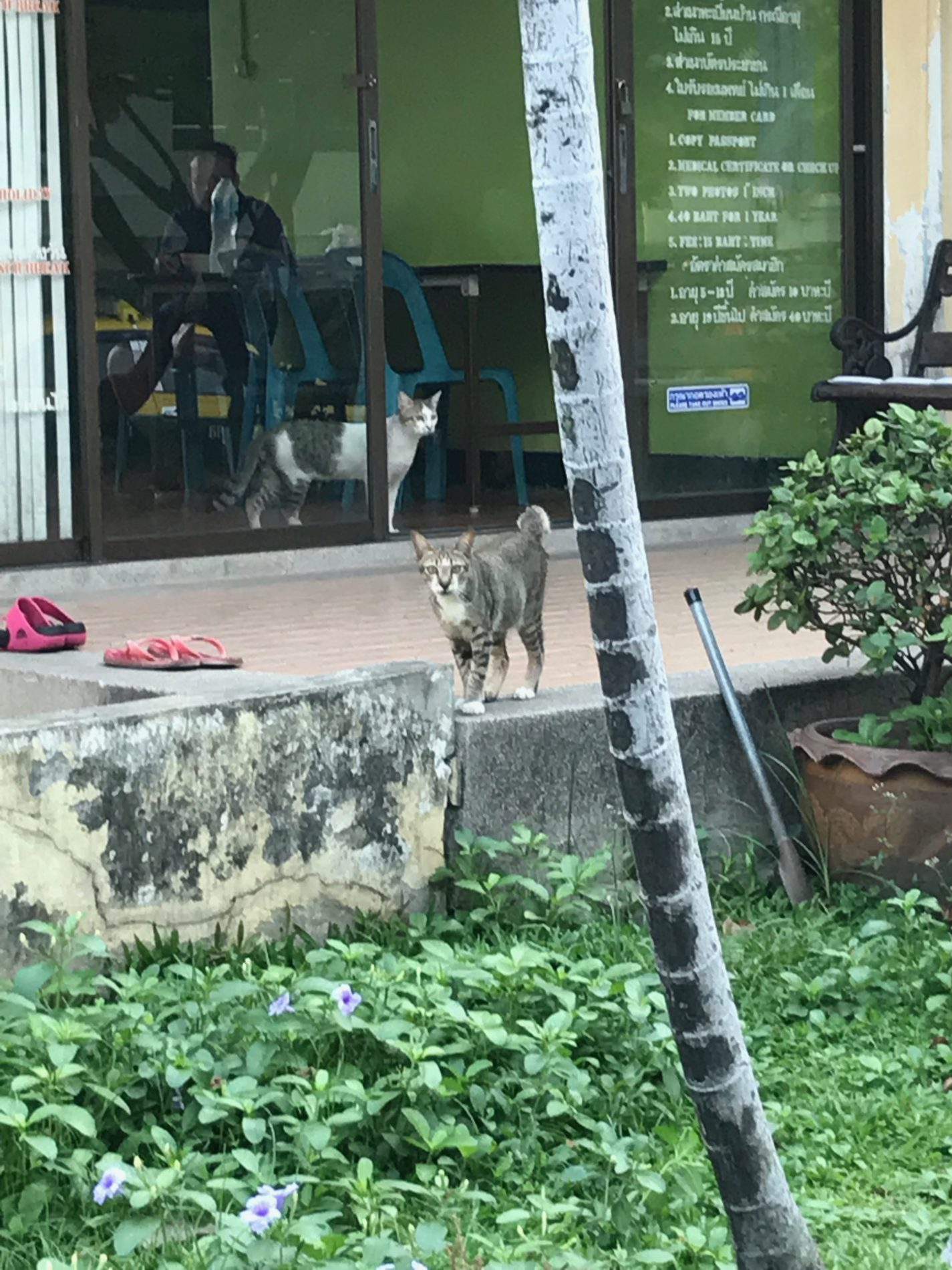 ベンチャシリ公園 猫