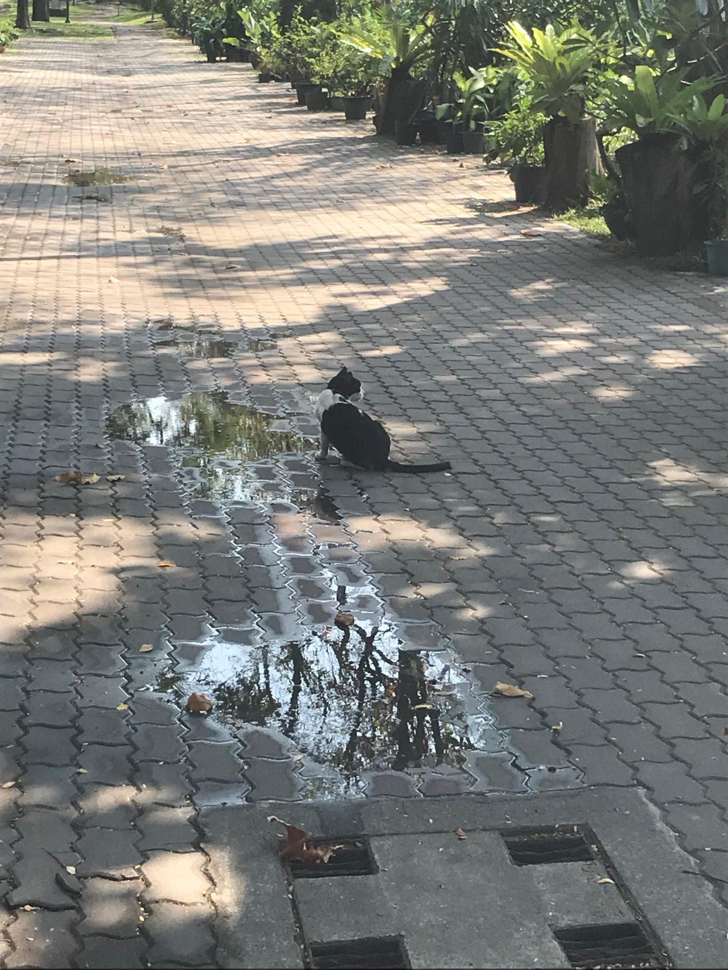 ベンジャキティ公園 猫