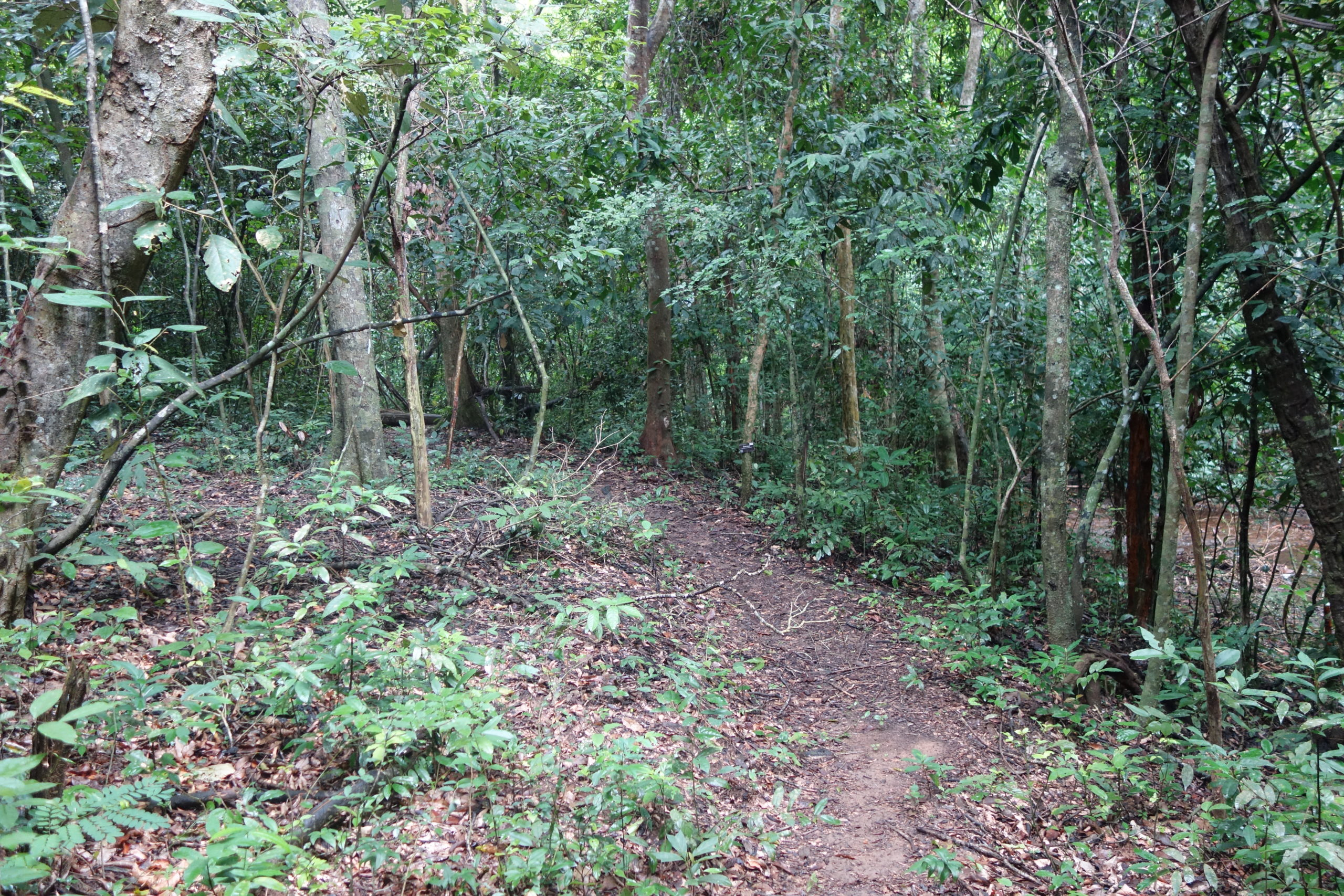 Nature Trail,Stream 1