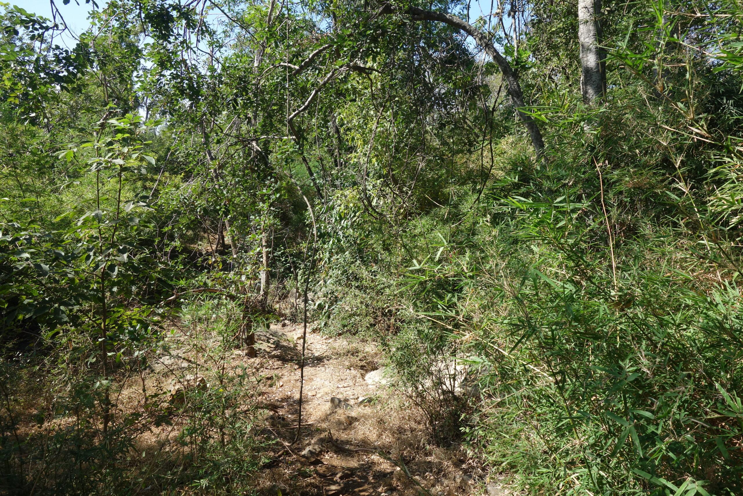 Pumuang Forest Park